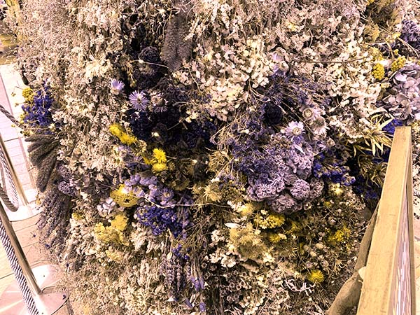 Xmas-tree_5525b.jpg