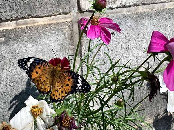 butterfly-yuppie_0505a.jpg