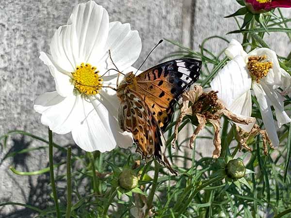 butterfly-yuppie_0510a.jpg