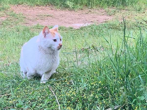 cat-yuppie_2425a.jpg