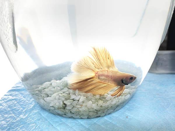 fish_3514a.jpg