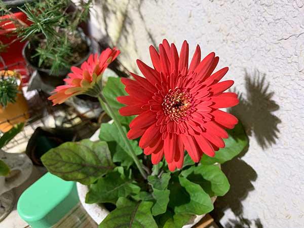 flower-yuppie_1656a.jpg