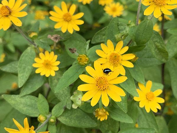 flower&bug_2097a.jpg