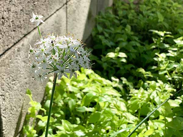 flowers-yuppie_0499a.jpg