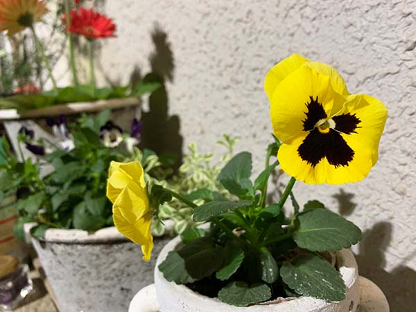 flowers-yuppie_1659b.jpg