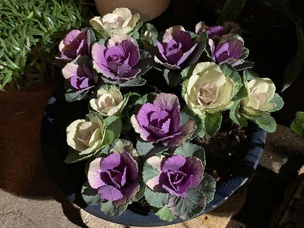 flowers-yuppie_1661a.jpg