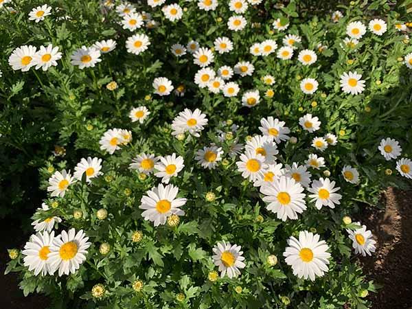 flowers-yuppie_6883a.jpg