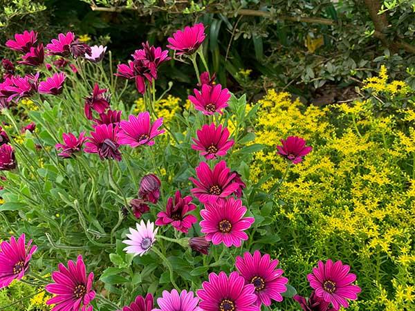 flowers-yuppie_8325a.jpg