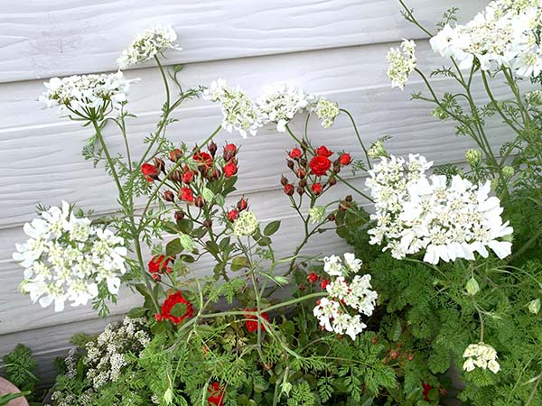 flowers-yuppie_8345c.jpg