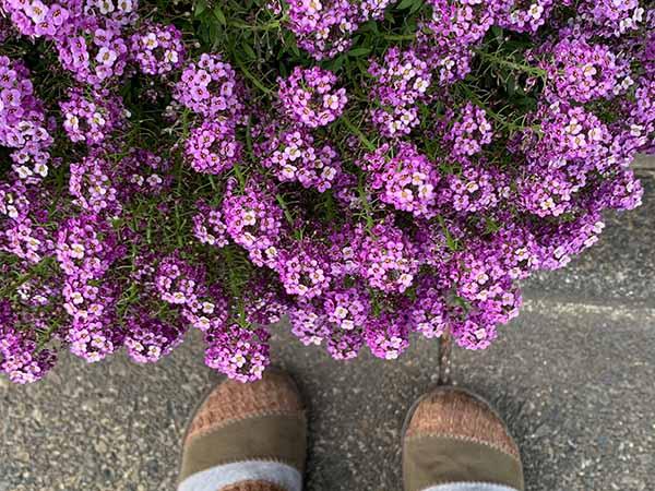 flowers-yuppie_8350a.jpg