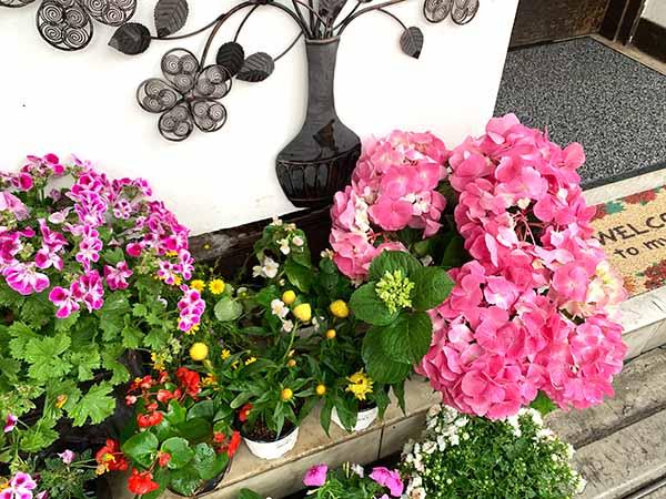 flowers-yuppie_8693a.jpg