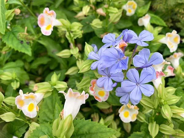 flowers-yuppie_8920a.jpg