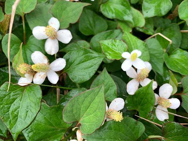 flowers-yuppie_8967a.jpg