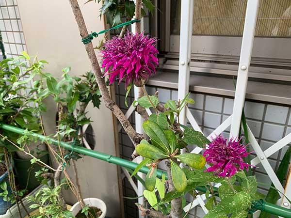 flowers-yuppie_9177a.jpg