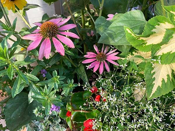 flowers-yuppie_9783a.jpg