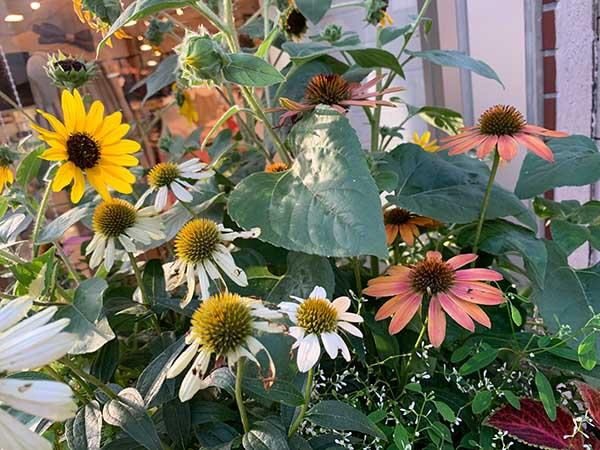 flowers-yuppie_9789a.jpg