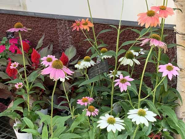 flowers-yuppie_9801a.jpg
