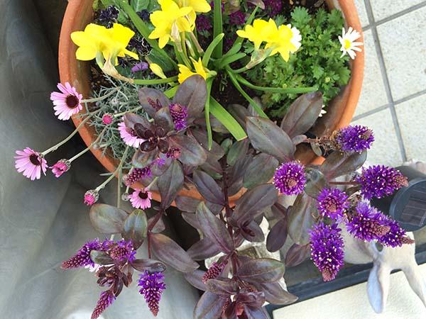 flowers_008a.jpg