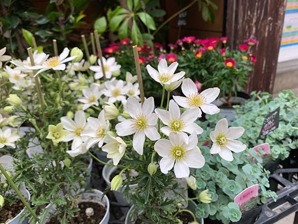 flowers_0252d.jpg
