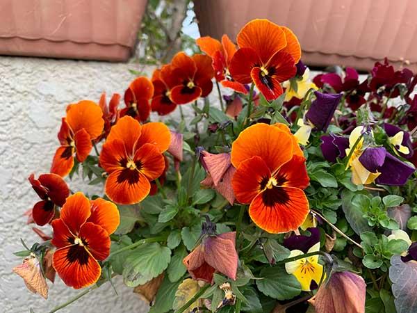 flowers_1138a.jpg