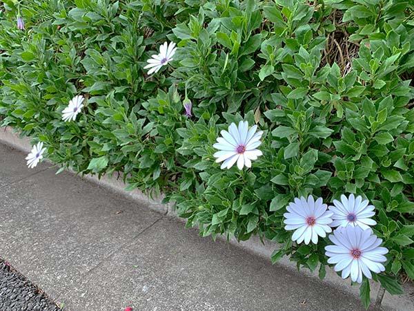 flowers_1357a.jpg