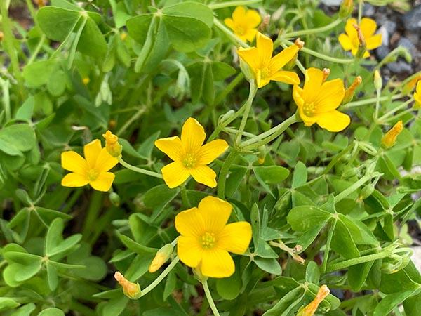 flowers_1772a.jpg