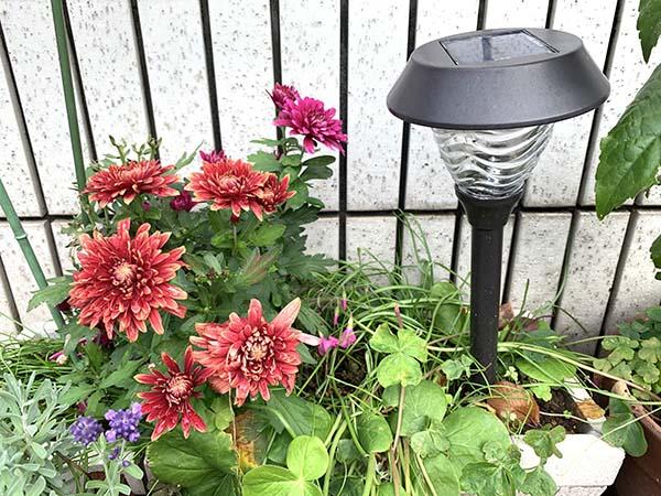 flowers_4383a.jpg