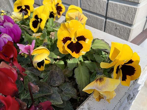 flowers_8911a.jpg