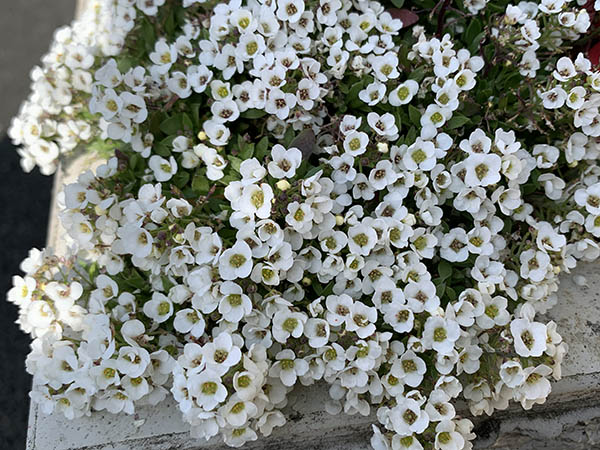 flowers_8917c.jpg