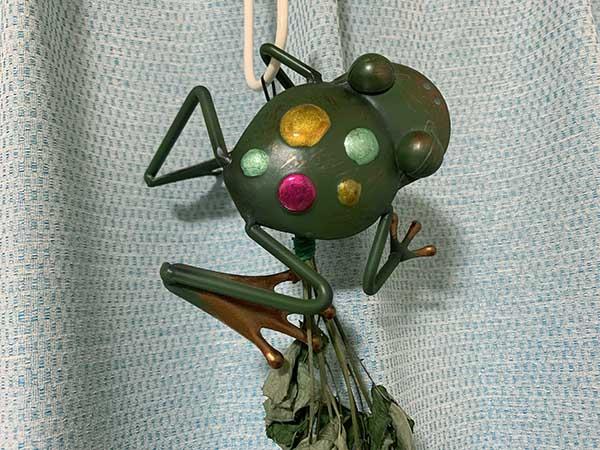 frog_8303a.jpg