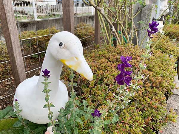 garden-yuppie_2899a.jpg