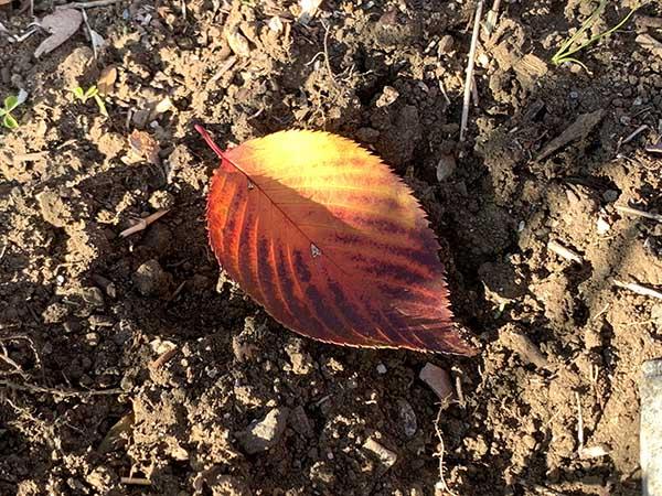 leaf_4882a.jpg