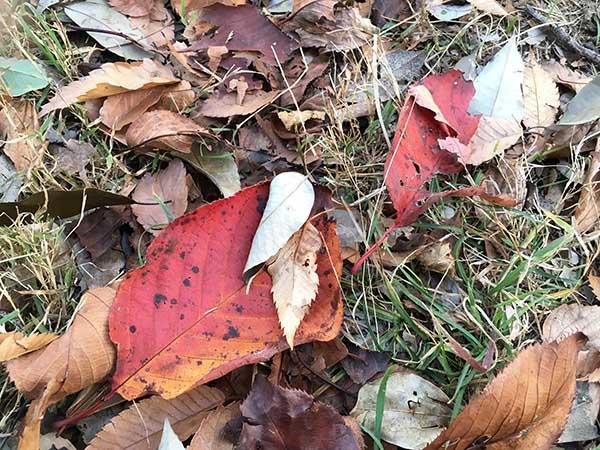 leafs_1311a.jpg