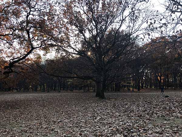 park_0694a.jpg