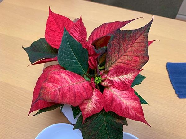 plants-yuppie_3752a.jpg