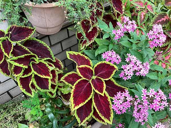 plants-yuppie_8916a.jpg