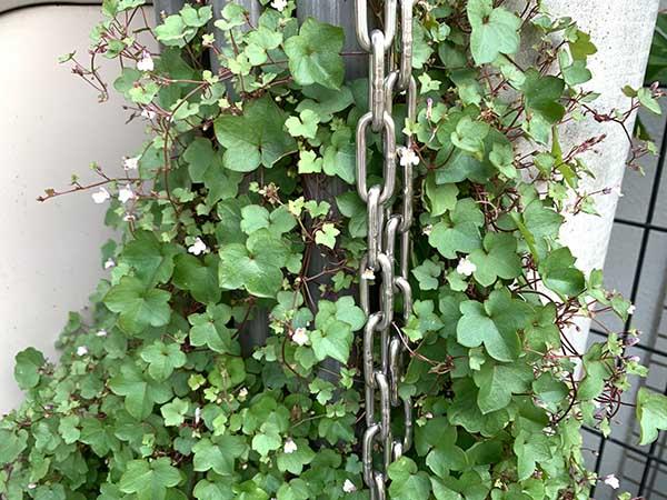 plants-yuppie_9172a.jpg