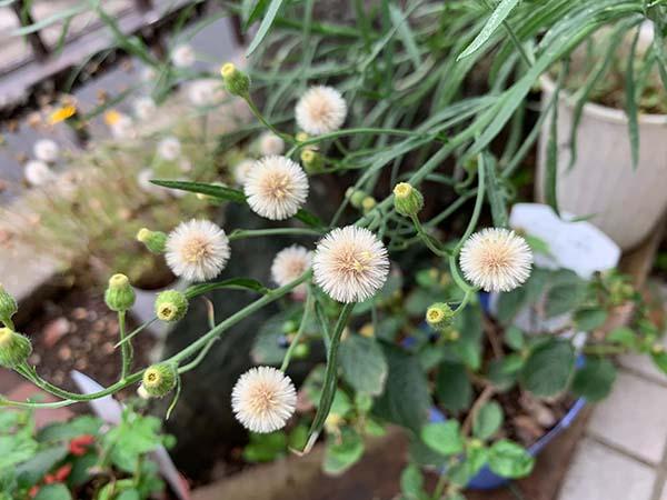 plants-yuppie_9283a.jpg