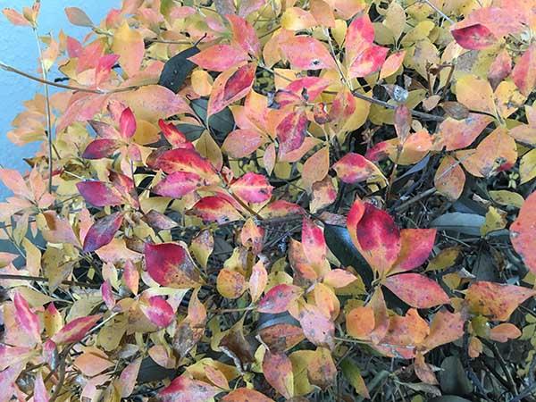 plants_1318a.jpg