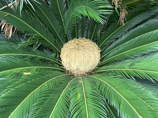 plants_1435a.jpg