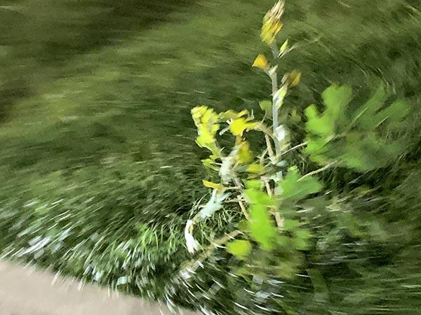 plants_2874a.jpg