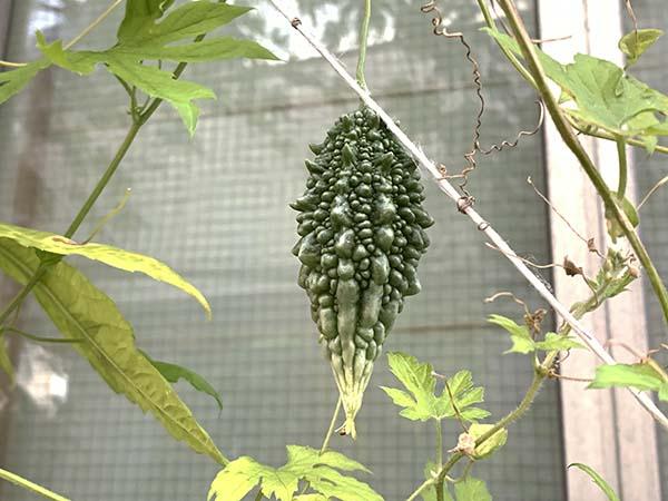 plants_8835a.jpg