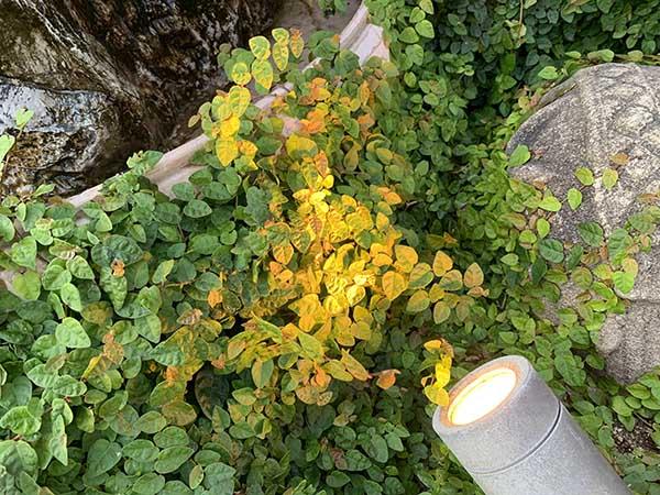 plants_8841a.jpg
