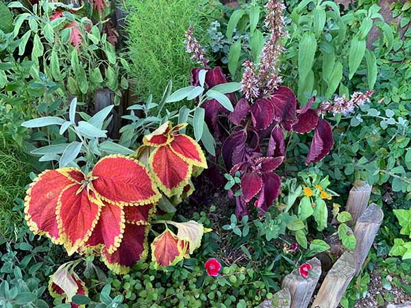 plants_8842a.jpg