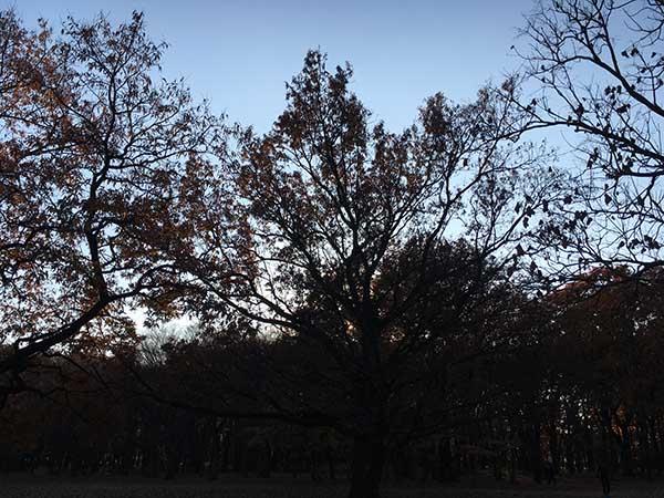 trees_1288a.jpg