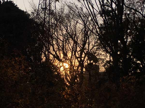 trees_1304a.jpg
